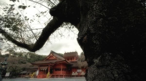 富士山本宮浅間大社(Photo by Masaki Kiuchi.)